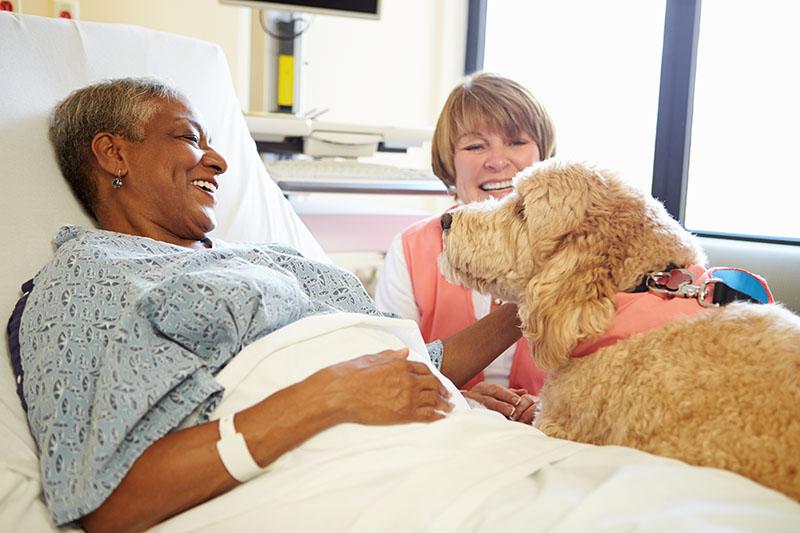 online animal insurance