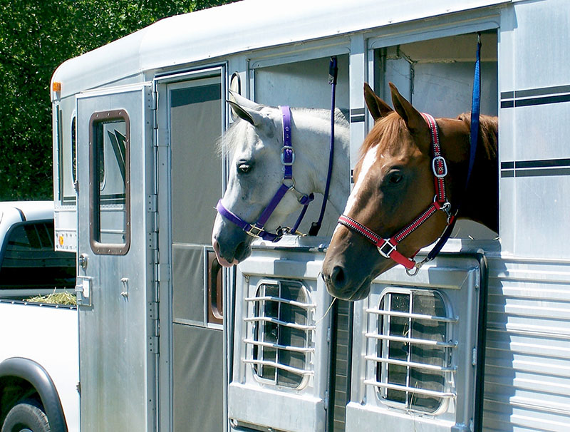 Animal Life Insurance Horse Insurance Arkagency Com
