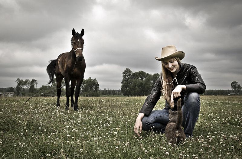 horse association insurance online