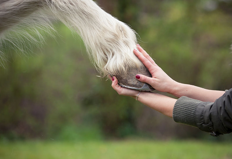 online horse association insurance