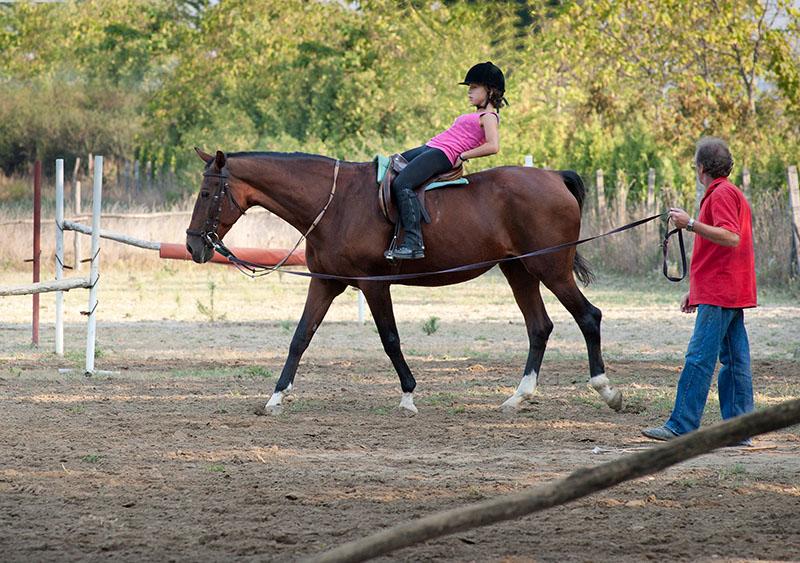 horse stable insurance online