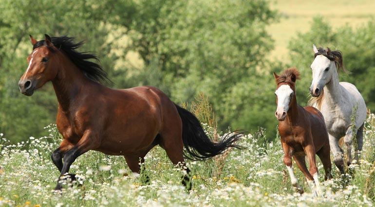 horse care and custody
