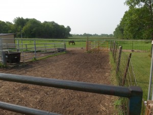 A catch and holding pen that has gate openings to two pastures, and a third for entry into the barn .