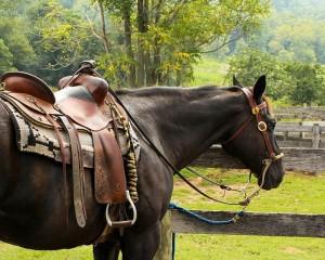 horse-176990_640