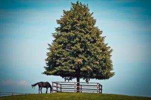 horse next to tree