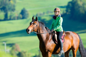 equine and livestock insurance