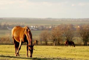 Health Insurance for Horses