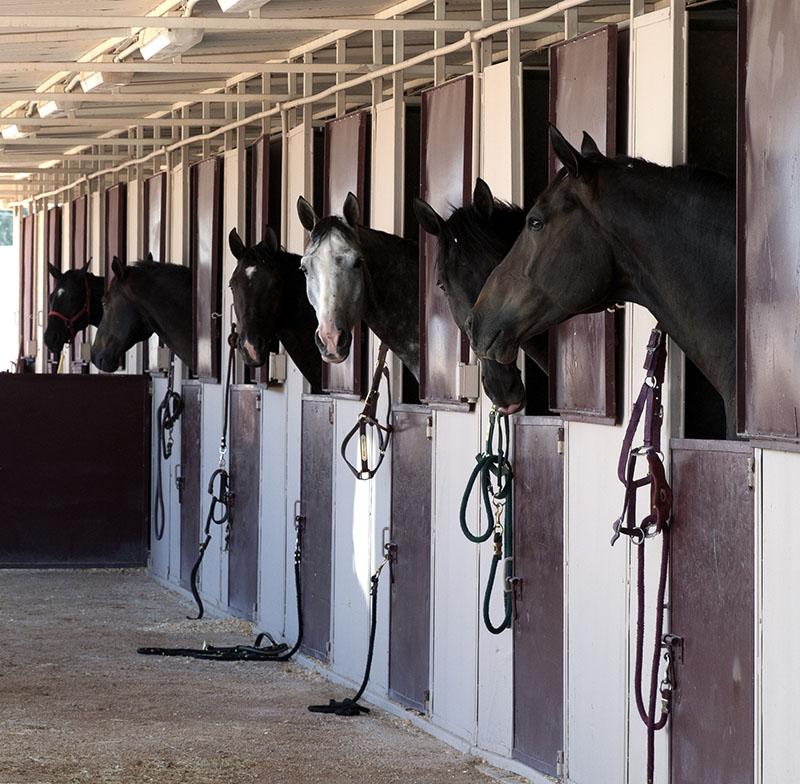 livestock insurance online