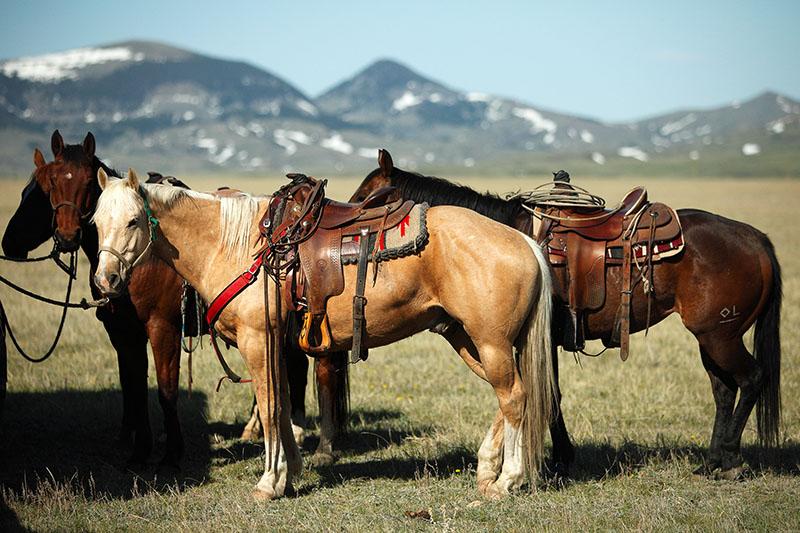 horse medical insurance online