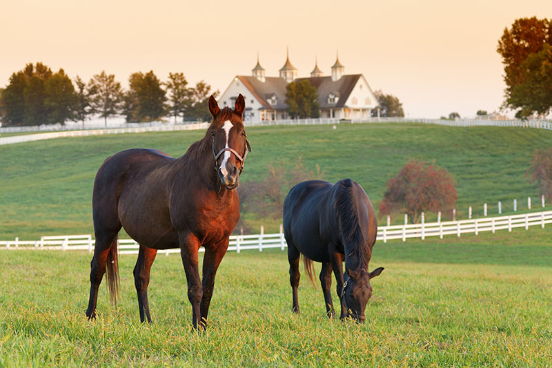 horse mortality insurance