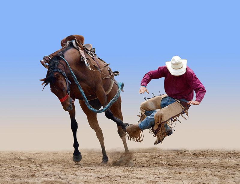 horse mortality insurance online