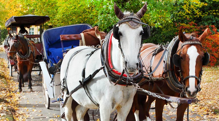 carriage and wagon ride insurance