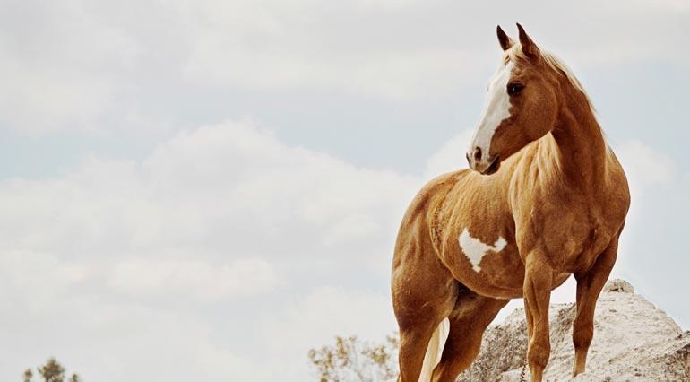 horse rescue club insurance