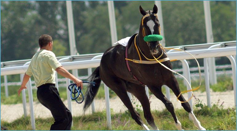 horse training instruction insurance