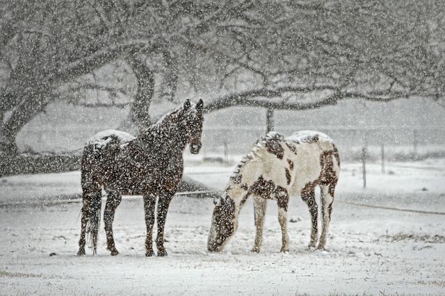 horse-419743_640