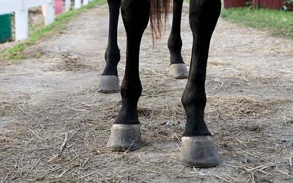 Importance Of Horse Hoof Care