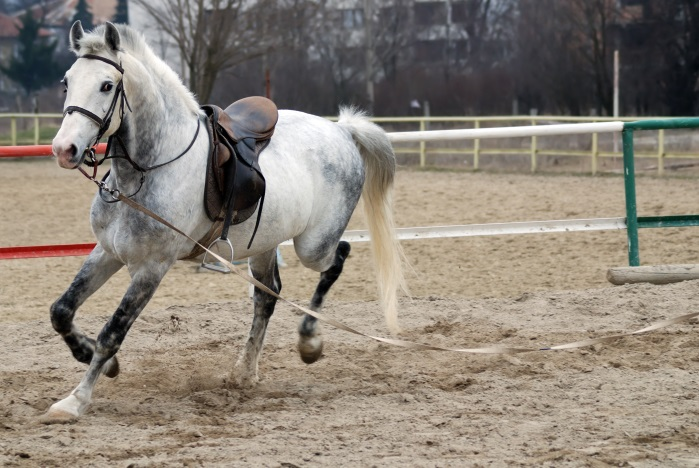 The Importance of Proper-Fitting Horse Tack
